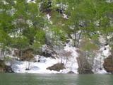 春奥利根湖緑