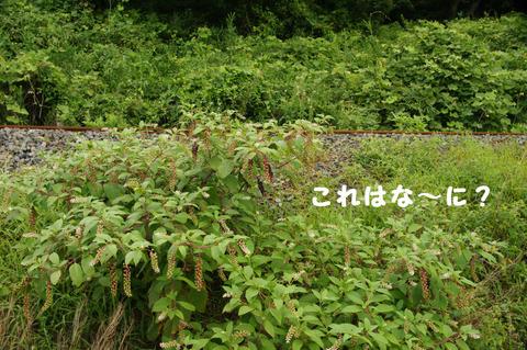 駅間三歩@楚原-麻生田29