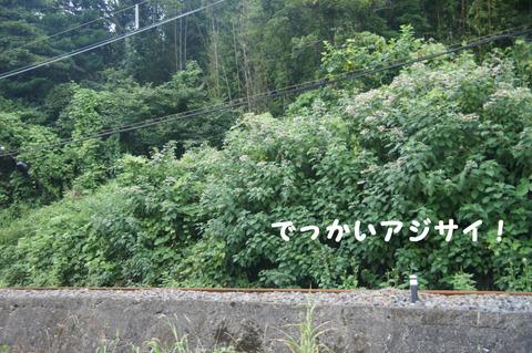 駅間三歩@楚原-麻生田31
