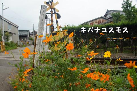 駅間三歩@楚原-麻生田03