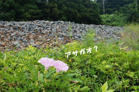 駅間三歩@楚原-麻生田24