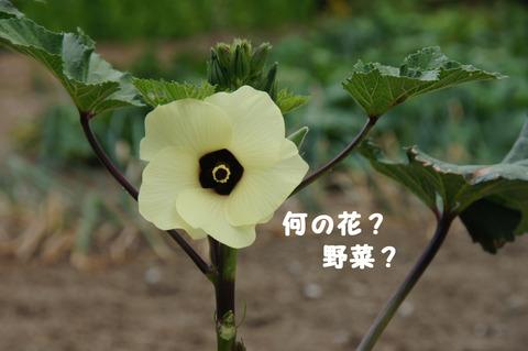 駅間三歩@楚原-麻生田06
