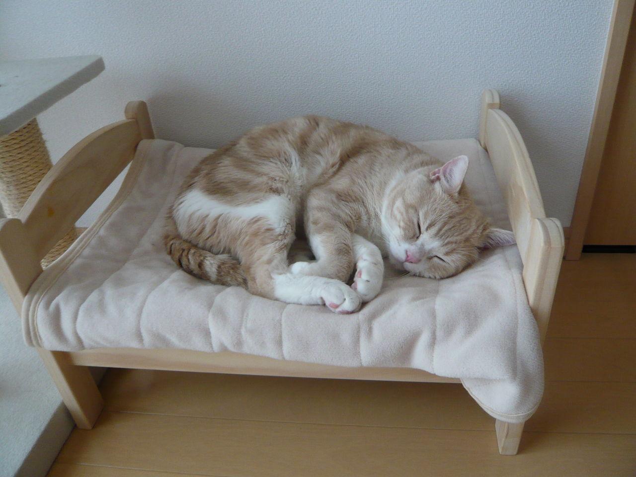 Толстуха спит на матрасе фото 4 фотография