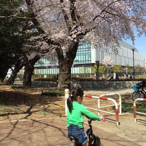 桜とストライダー