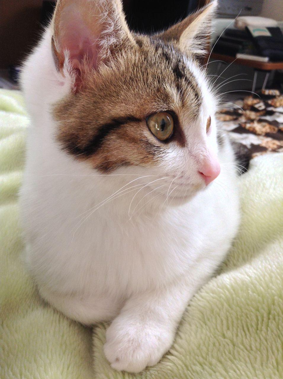 な つく 野良猫 野良猫って普段どんな生活をしてる?オスとメスでは行動パターンが変わるの?