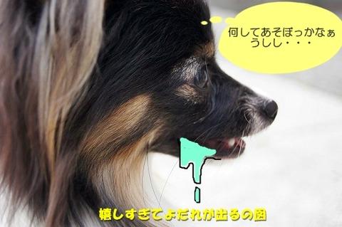 2DSC00094