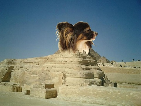 tsphinx