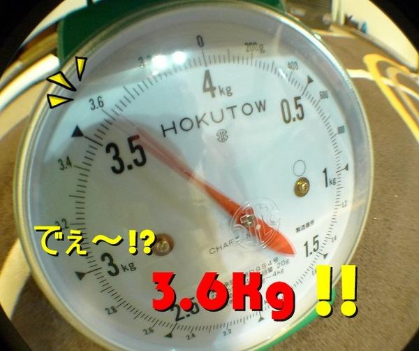 02P1170577-crop