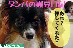 パピヨン人気ブログランキングへ