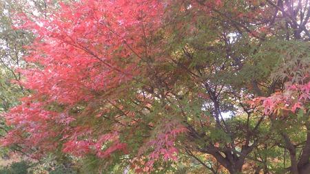 陶の郷の紅葉