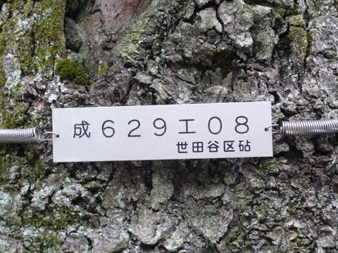成城 桜保存樹 プレート