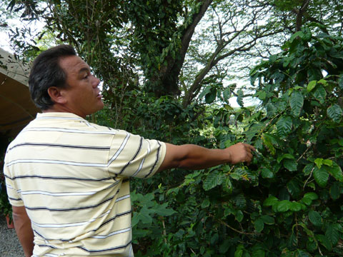 エビ釣りツアー コーヒーの木とオカモトさん