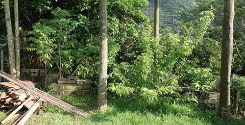DSC03785一番座庭の木