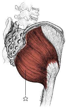 大殿筋 【大殿筋の起始・停止】(起始)後殿筋線の後方、仙骨・尾骨の外側縁、胸腰筋... タニノ・