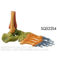 sqs22s4r