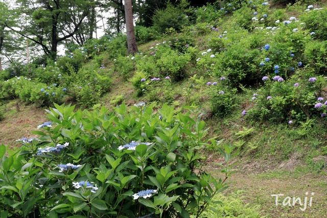 03 96  写真、チャチャワールドいしこし、宮城県登米市石越町、Tanji