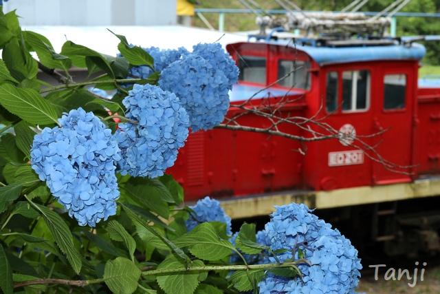 28 96 写真、チャチャワールドいしこし、宮城県登米市石越町、Tanji