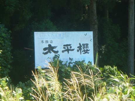 太平櫻酒造 (1)