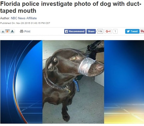 32000-911calls-to-save-a-dog[1]