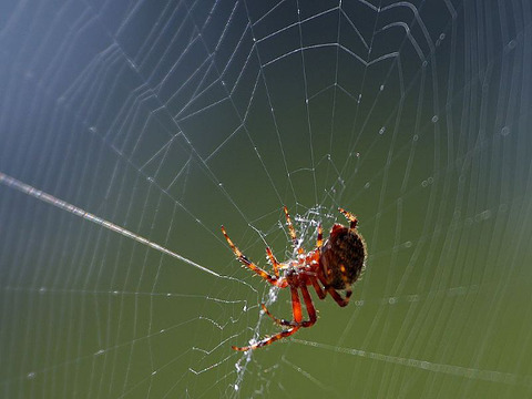 spider[1]