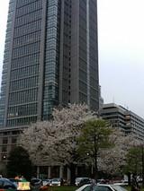 東京駅桜2