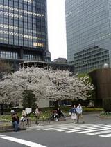 東京駅桜1