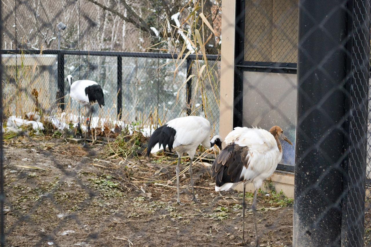 旭山動物園-67