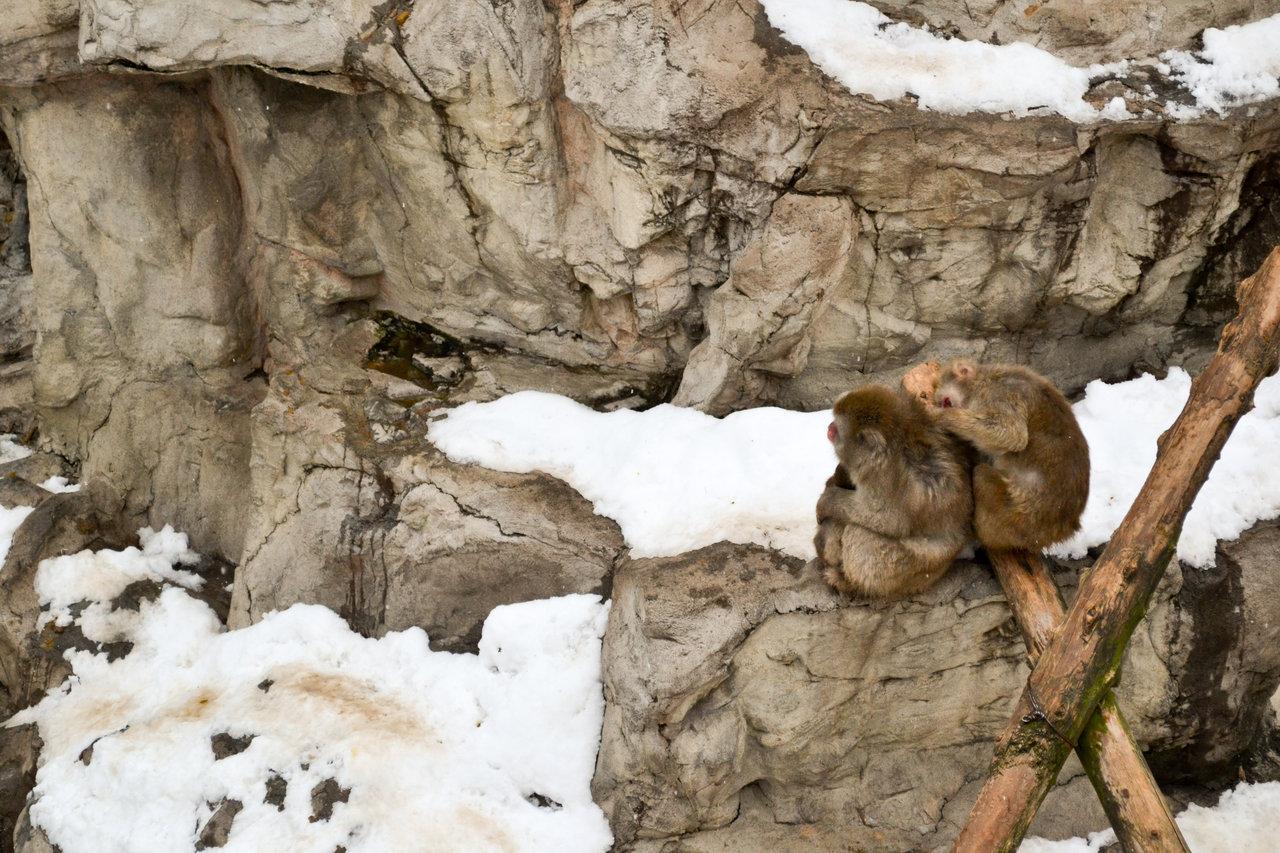 旭山動物園-74