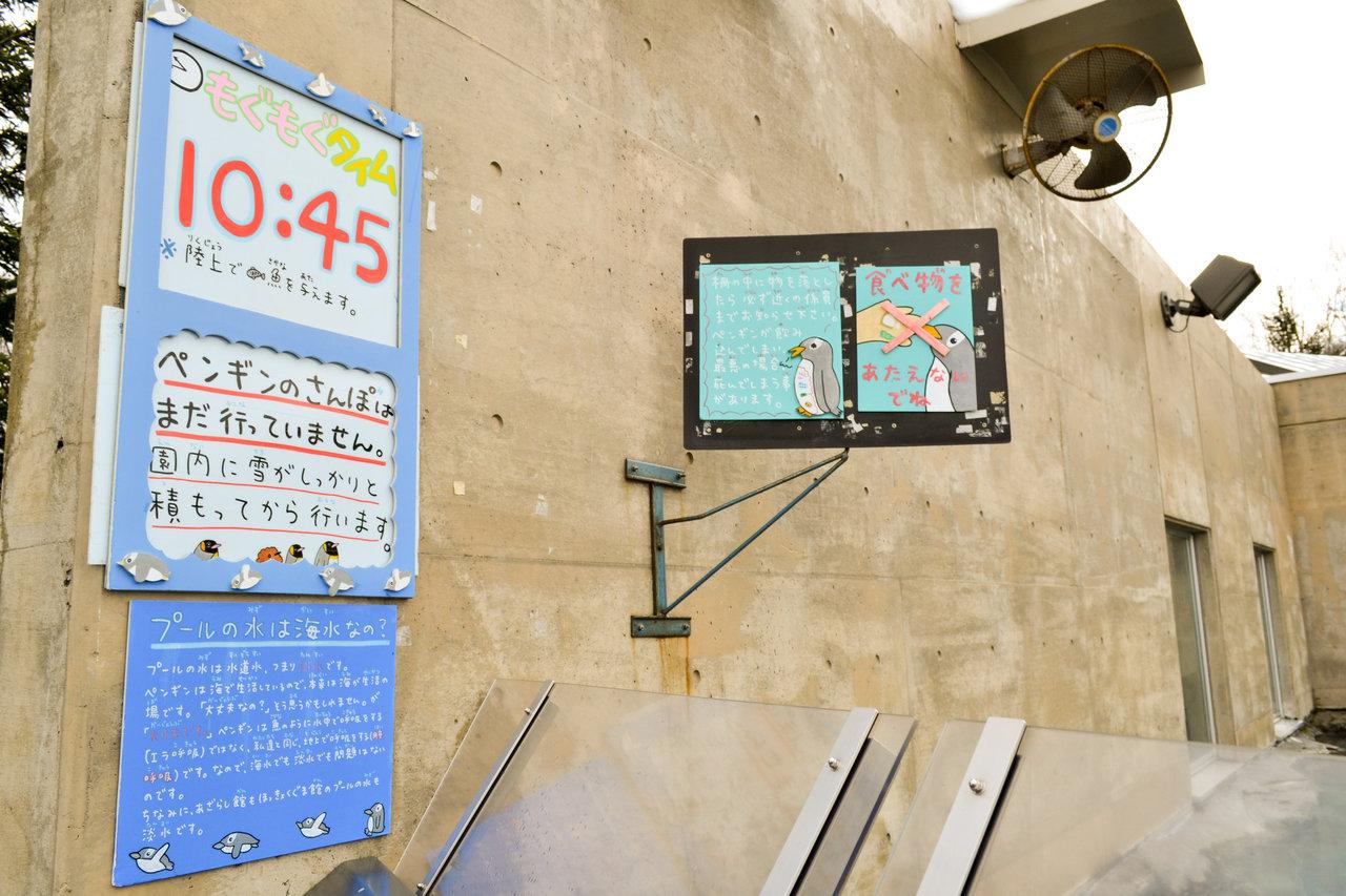 旭山動物園-35