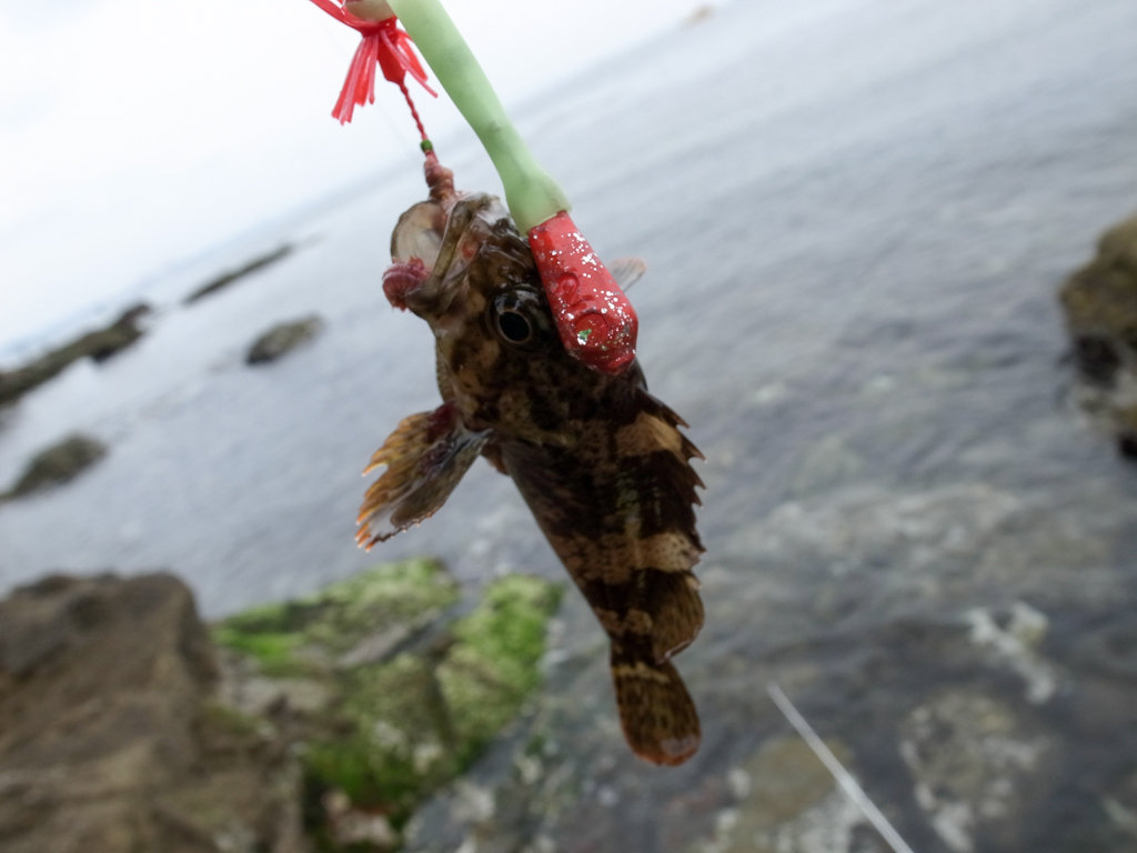 猿島の釣りポイントは磯とサーフ! ブラクリを忘れずに
