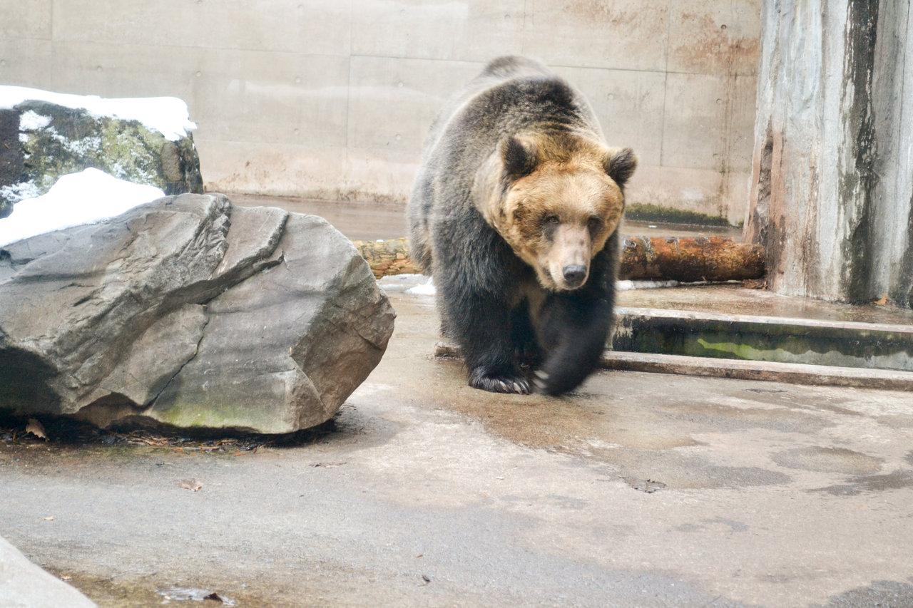 旭山動物園-62