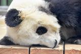 神戸の王子動物園でもっふもふのパンダを満喫してきた