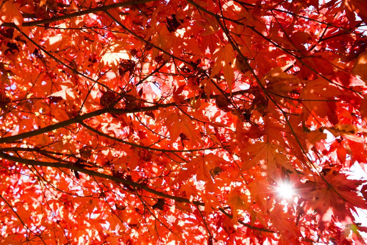 紅葉と三頭大滝を望む森林セラピーロード「檜原都民の森」 #tokyo島旅山旅