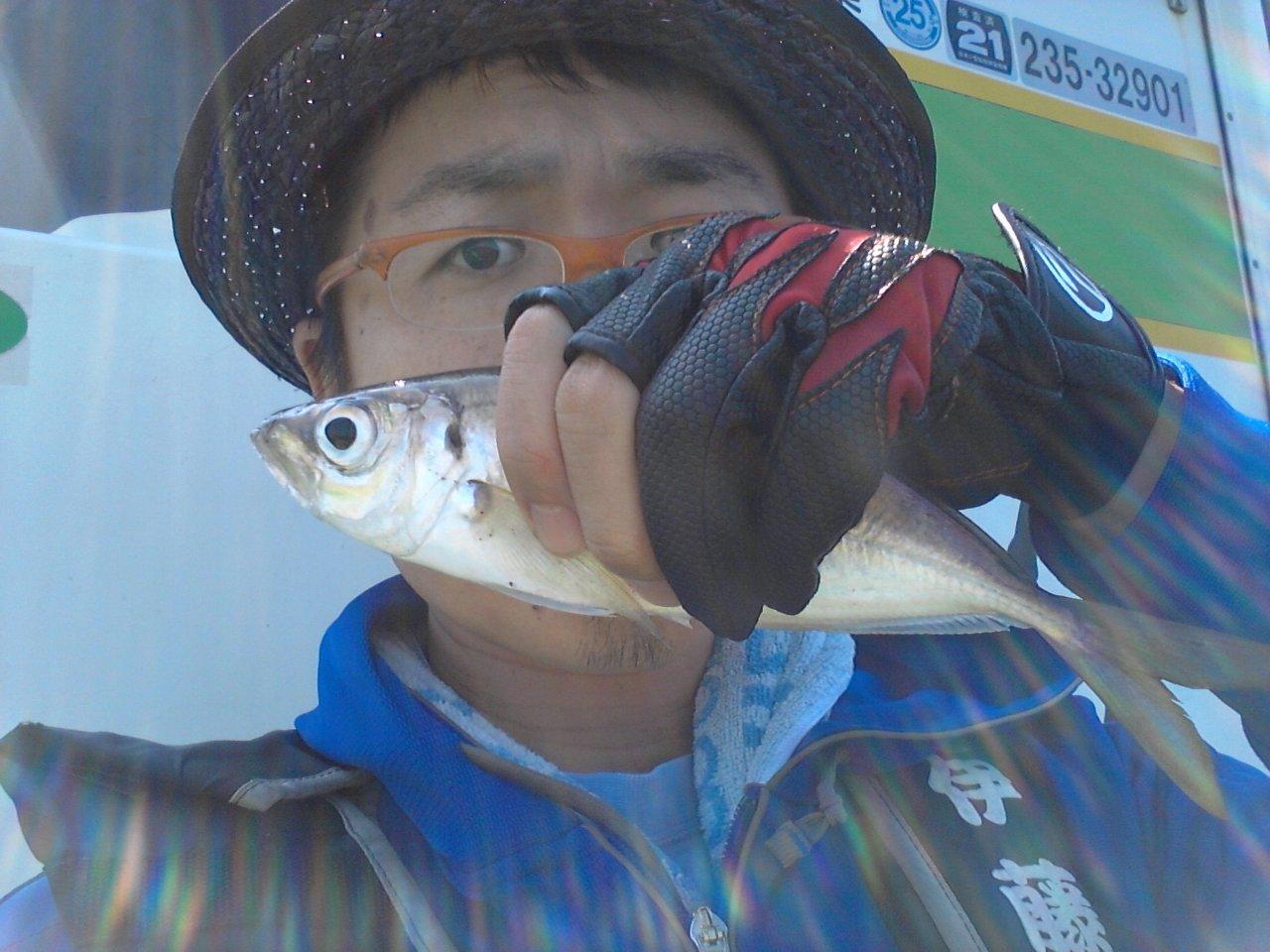 東京湾LTアジ釣りは手ぶらで快釣 行徳・伊藤遊船(2014年7月2日)
