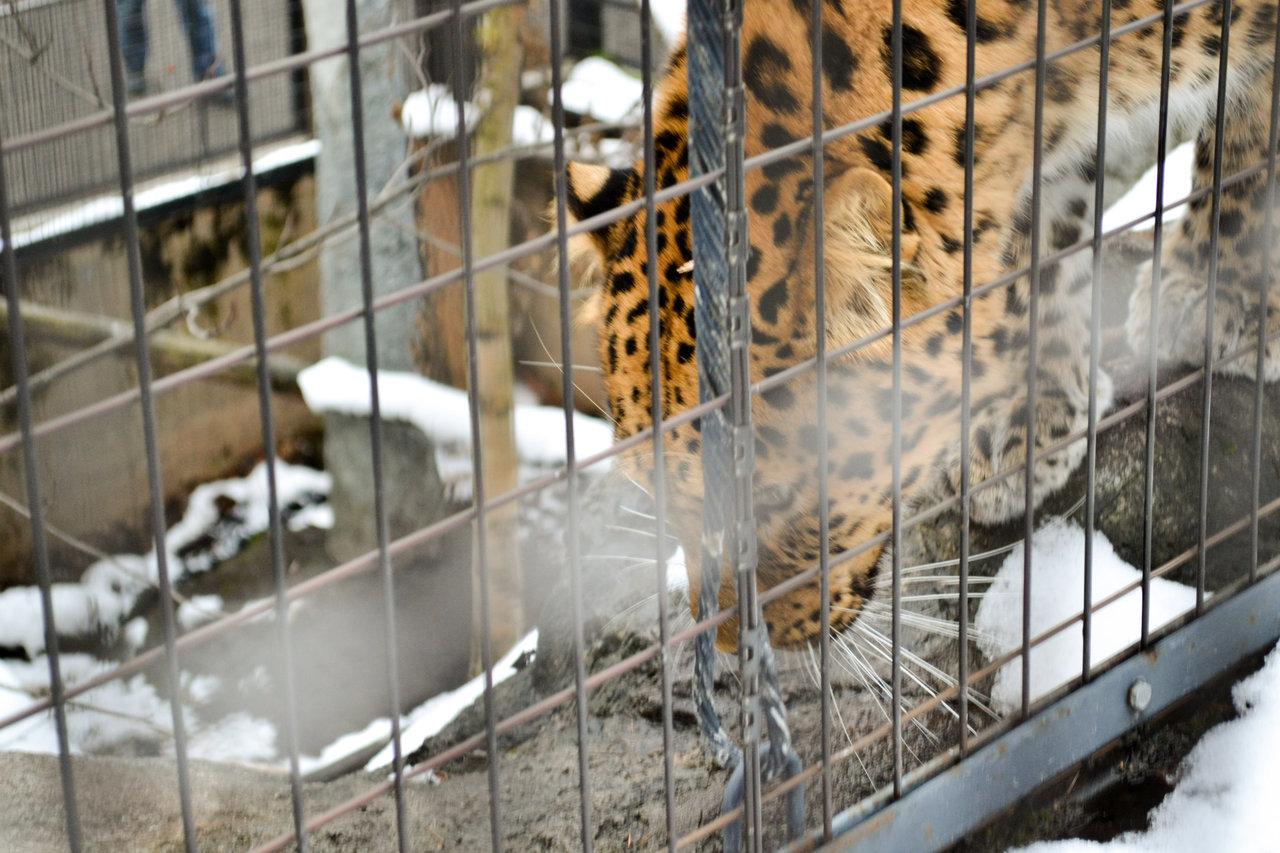 旭山動物園-63
