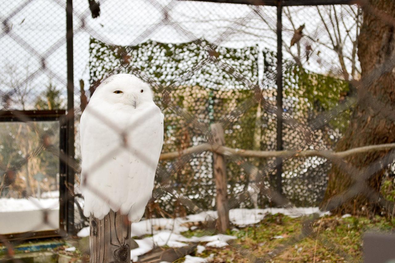 旭山動物園-48