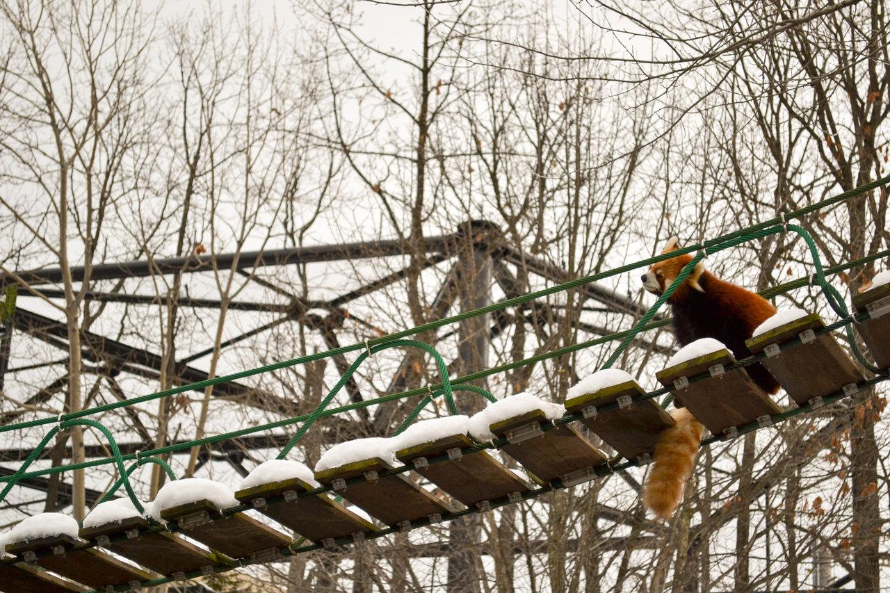 旭山動物園-45