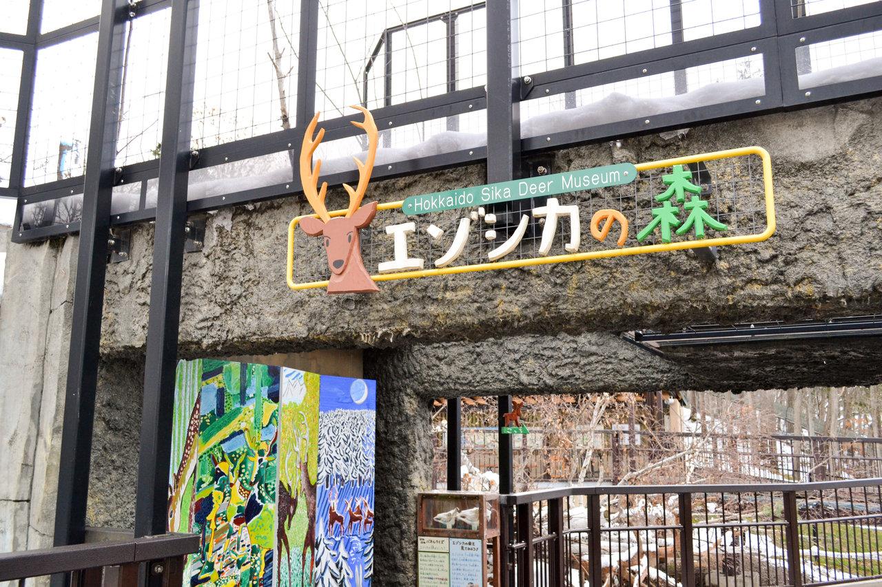 旭山動物園-64