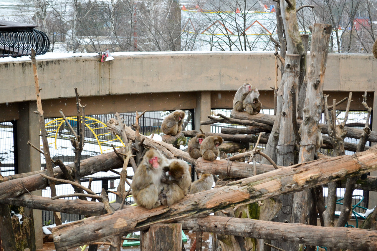 旭山動物園-75