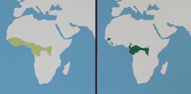 チンパンジー分布図_edited-1