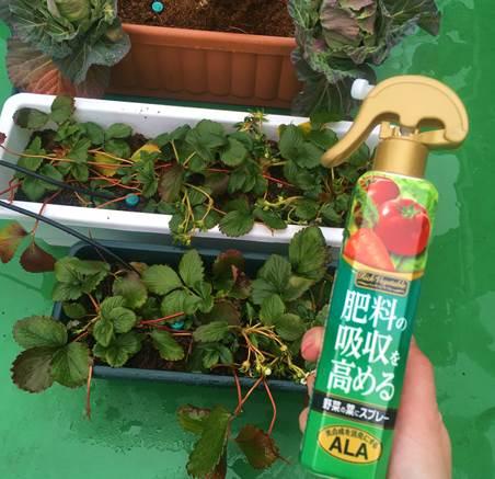 肥料の吸収を高めるスプレー