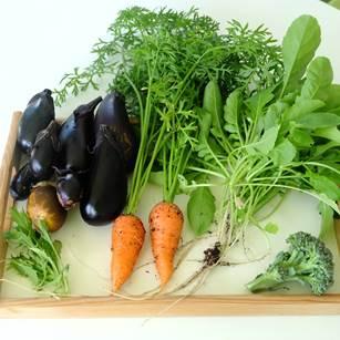 収穫野菜大量