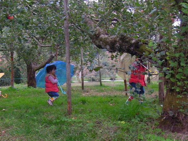 リンゴ狩り03