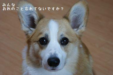 ++嗚呼、短足動物園++ border=