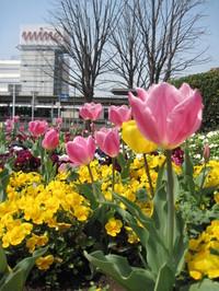 某駅前ロータリーの花壇♪