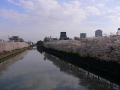 綾瀬川から