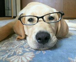 眼鏡ゴン太