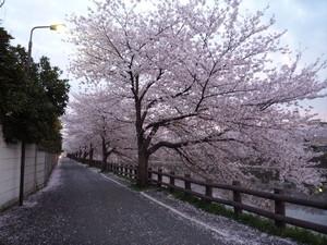 綾瀬川沿い