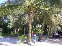 椰子の実つんつん