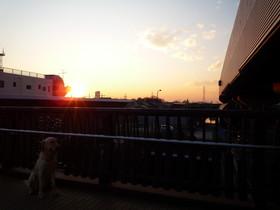 夕日とゴン太